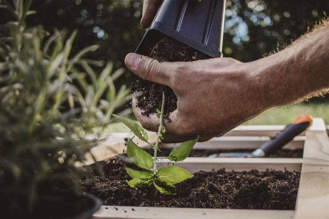 How to create a DIY planter box and grow your summer herbs